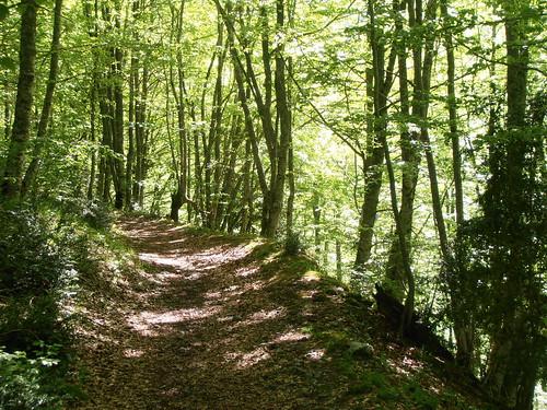 LA MATURE (chemin) 114