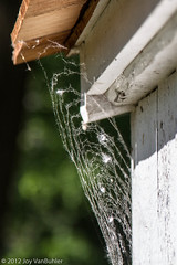 146/365 - Cobwebs