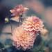 Flower - Aero Ektar 4x5 Portra 400 by Zach Boumeester
