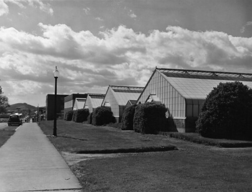 Oregon State College Greenhouses, 1954