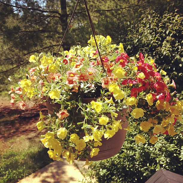 My new beautiful hanging basket that I'm so excited is bringing color to my porch! #lifejoy