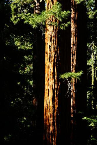 california sunset sequoia redwoodcanyon kingscanyonnationalpark june2012