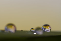Water droplets_8
