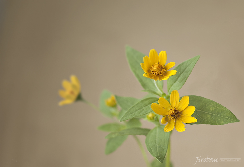 Small yellow flowers digital grin photography forum 739891557610a10258e3bg mightylinksfo Image collections