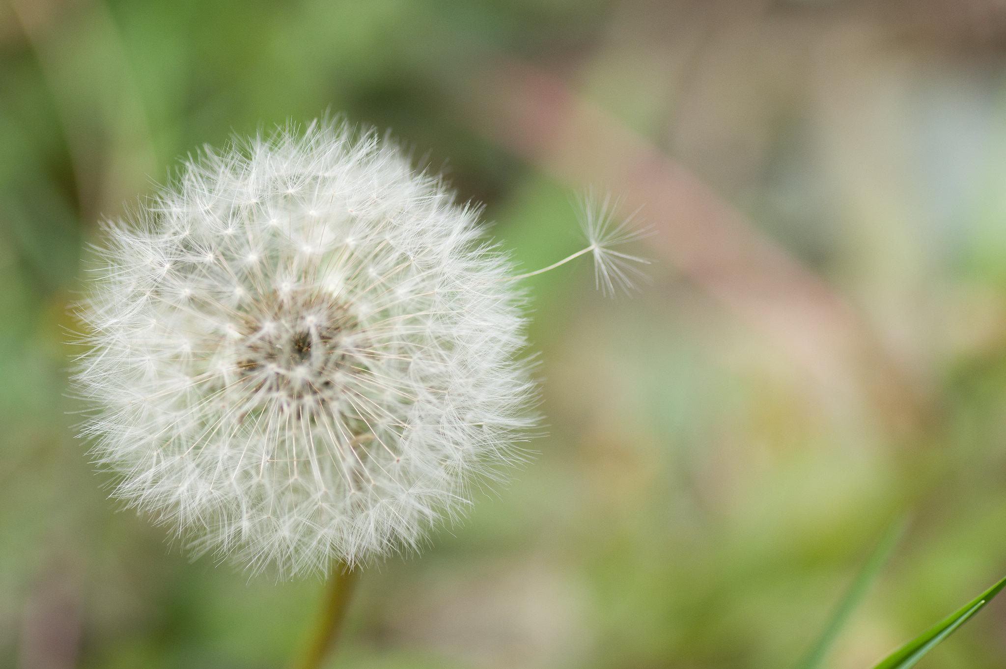 不要臉的再發義學春季小花