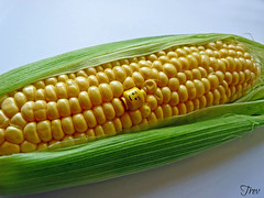 plant(0.0), produce(0.0), fruit(0.0), dish(0.0), crop(0.0), sweet corn(1.0), agriculture(1.0), food grain(1.0), vegetarian food(1.0), maize(1.0), corn on the cob(1.0), food(1.0), corn on the cob(1.0), cuisine(1.0),
