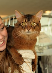 Abyssinian and Somali Cats
