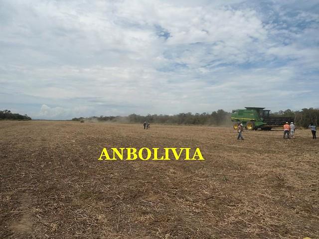 BOLIVIA ENTRE LOS PRODUCTORES DE SOYA Y AGRICULTORES PROPONEN TRIPLICAR LA PRODUCCIÓN AL 2025