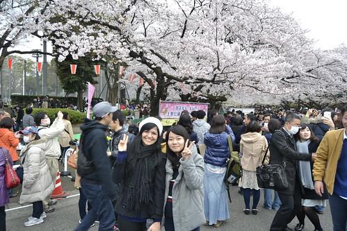 Hanami Party - Ueno Park - Tókyo 2016