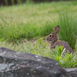 Bunny in NYBG