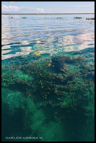 Cenote en laguna