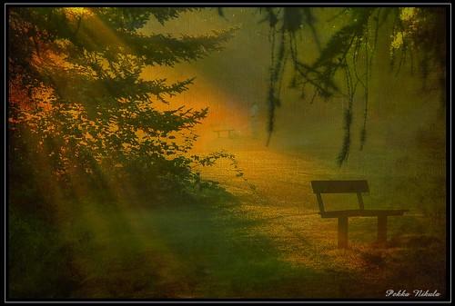 park morning dog mist sunrise