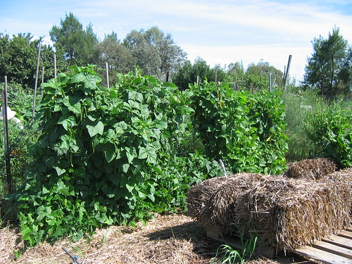 Beans on frame Jan 2012