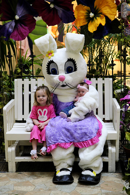 Bunny(1)