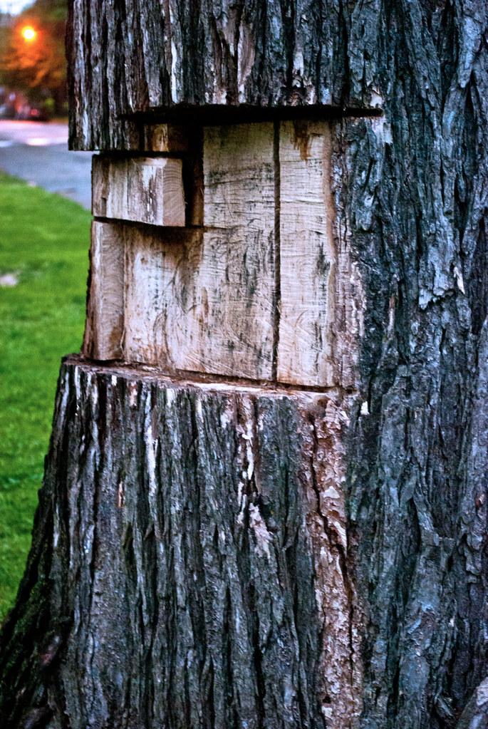 365-296 Gave Wood