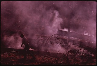 "In August, 1973 a major forest fire swept through 17,470 acres of the western slopes of the Sierra Mountain Range near Sonora. Fire-fighter in part of the burn area called ""granite fire,"" September 1973"