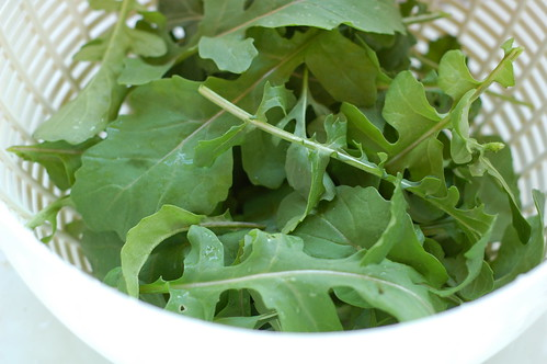 Fresh arugula from the garden by Eve Fox, Garden of Eating blog, copyright 2012