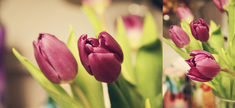 purple tulips diptych