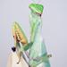 Sphodromantis gastrica - African Mantis by Jonne Seijdel
