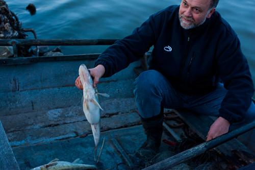 fish boat fishing sweden zander stig wildfood rowingboat östergötland ringarum project365 gös sanderlucioperca storanorrby sweden2012 louseymalinsweddingweekend