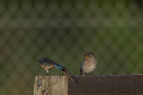 Bluebird Kids_8469.jpg