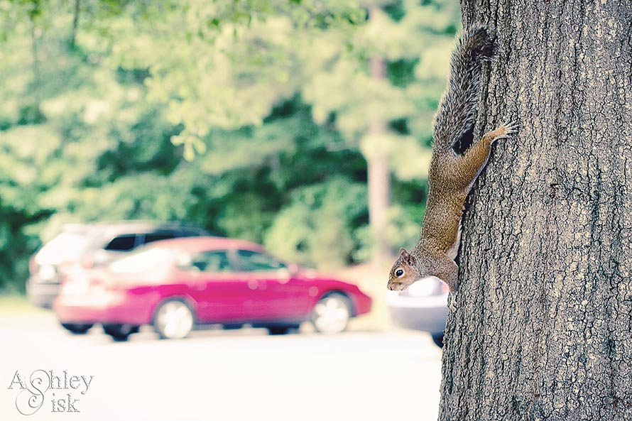 Squirrel on a Tree RS