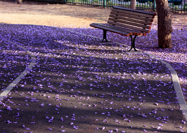 purple_blossom2