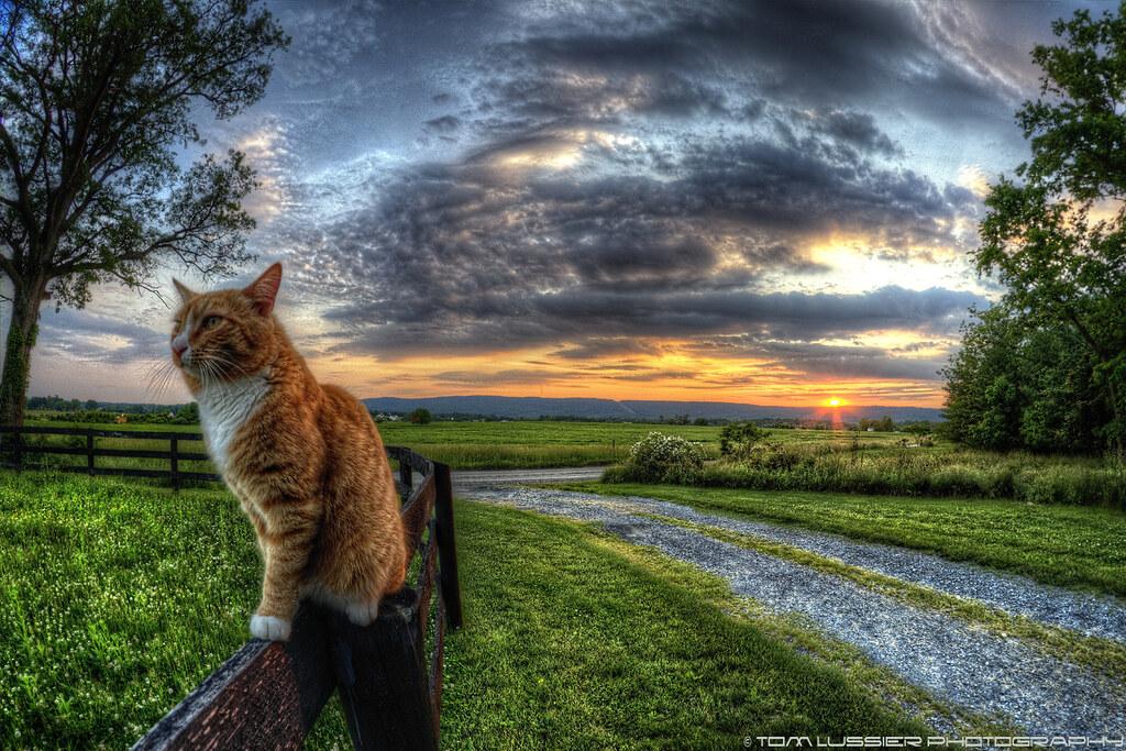 Sunset Cat Elevation of 22 Burkittsville MD