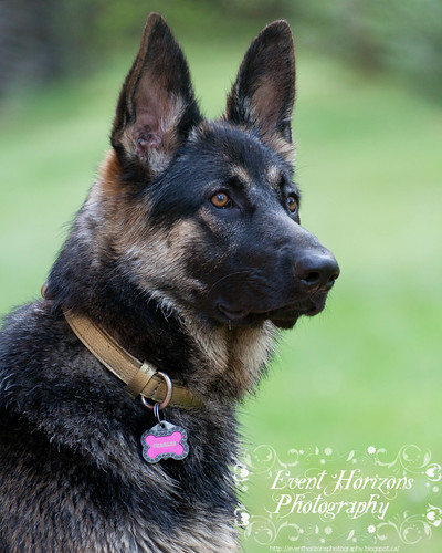 German Shepherd by MB Event Horizon
