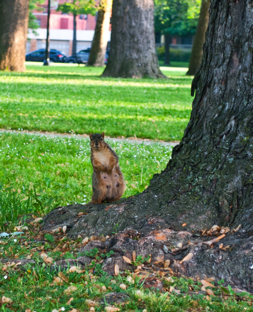 365-322 Curious Squirrel