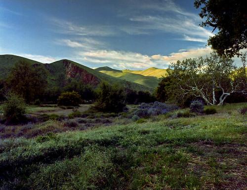 california flowers usa tree film nature analog mediumformat landscape 645 bronica 220 etrs etrsi etr