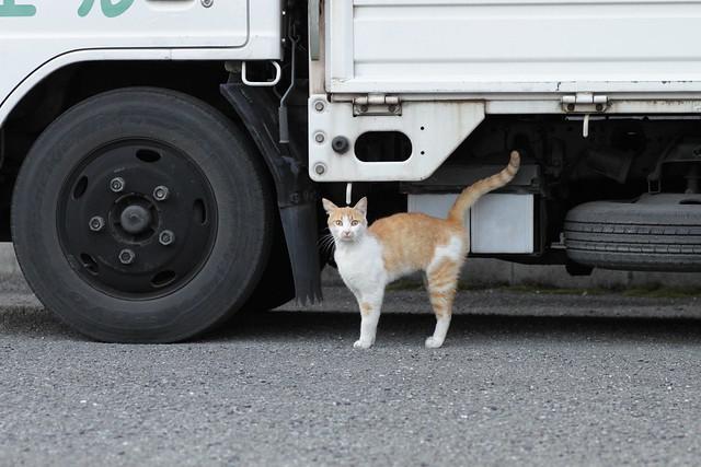 びっくり顔の茶白猫 2