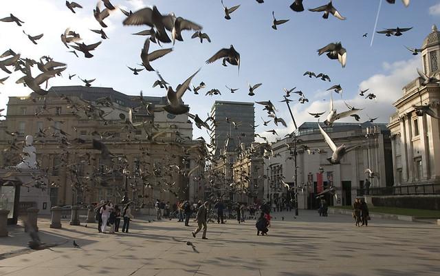 Лондон,Демоны или  Голуби Трафальгарской площади, photo by Massaraksh