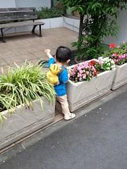 朝散歩とらちゃん (2012/6/12)