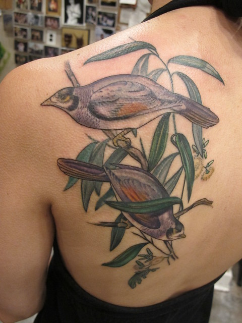 Finished noisy miners