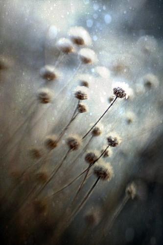 無料写真素材, 花・植物