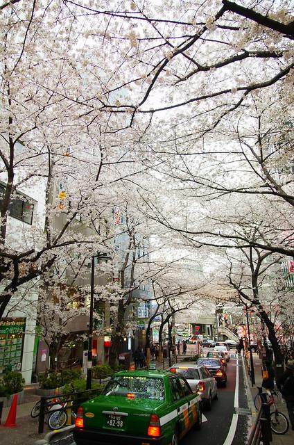 Sakuragaoka 01