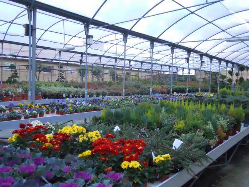 Jardineros en acci n consejos para comprar plantas en el for Viveros de plantas en quillota