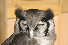 Small Breeds and Owl Centre