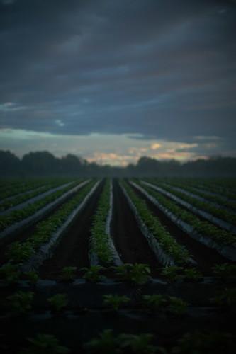 Field (4:51am)