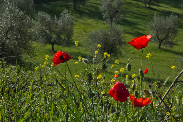 Umbria in Bloom - Italy