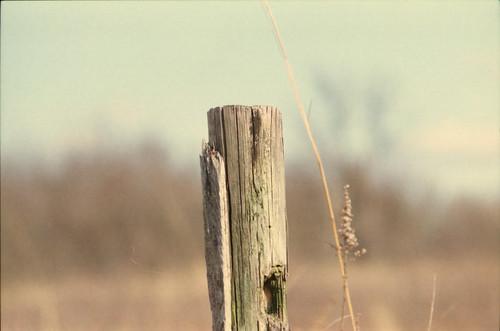 Lone Post