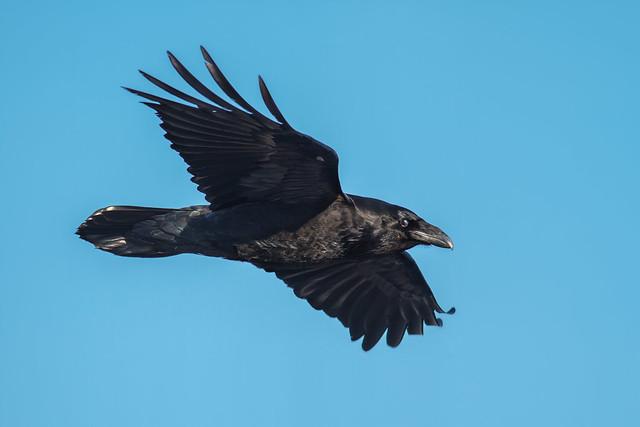 Raven Flight Nude Photos 21