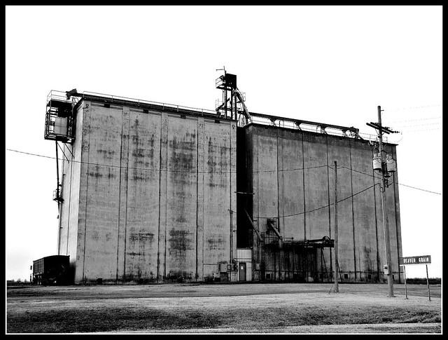 Beaver Grain