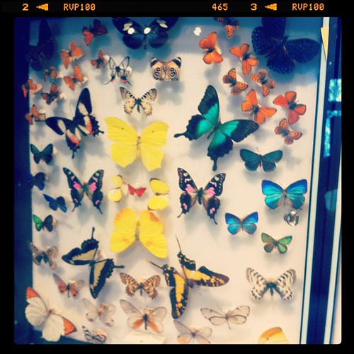 Butterfly exhibit at Harvard Museum of Natural History