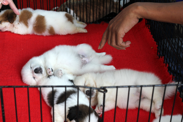 Pet dogs for sale