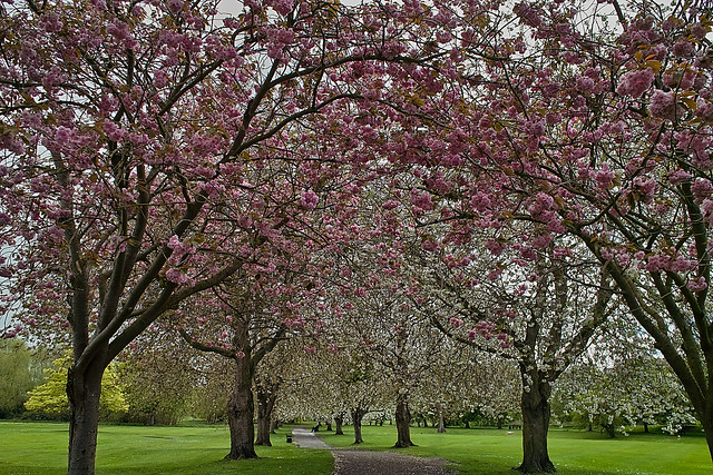 May blossom - Bourne