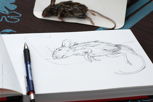 Mouse, sketch