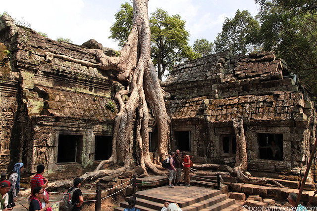 The Iconic Ta Prohm Shot