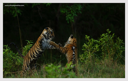 Play time @ Bandhavgarh